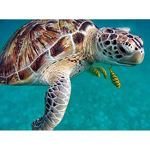 Tortuga, Maldivas
